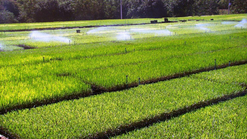 Inovação agro vai detectar parasitas nas lavouras de soja